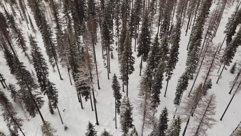 Snowbike Logged